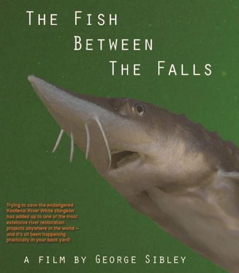 Picture of The Fish Between the Falls: The Kootenai River White Sturgeon (DVD)