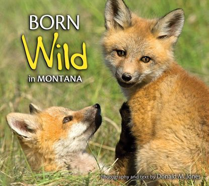 Picture of Born Wild in Montana
