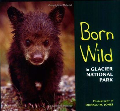 Picture of Born Wild in Glacier National Park