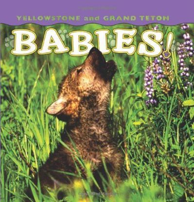 Picture of Yellowstone and Grand Teton Babies!