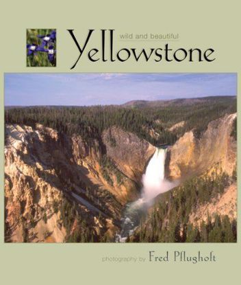 Picture of Wild and Beautiful Yellowstone