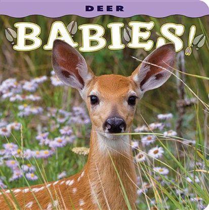 Picture of Deer Babies!