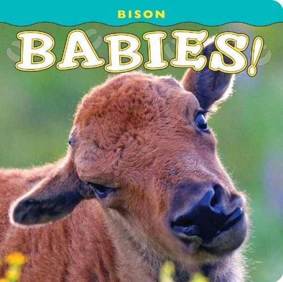 Picture of Bison Babies!