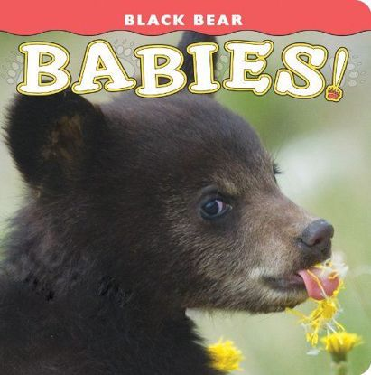 Picture of Black Bear Babies!