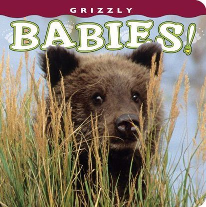 Picture of Grizzly Babies!