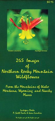Picture of 265 Images of Northern Rocky Mountain Wildflowers