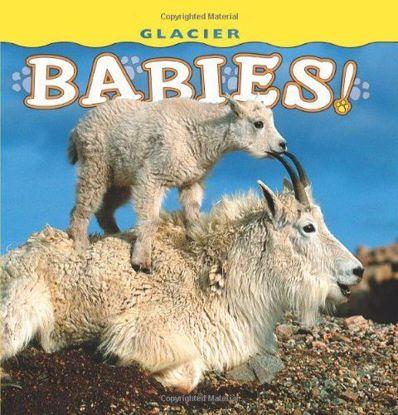 Picture of Glacier Babies!
