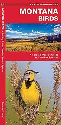 Picture of Montana Birds: A Folding Pocket Guide to Familiar Species