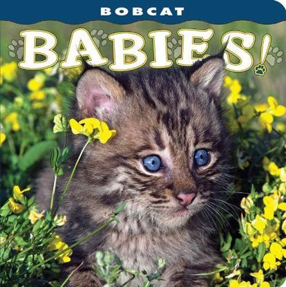 Picture of Bobcat Babies!